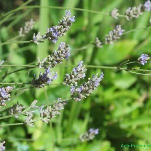 Jardin de la Provence